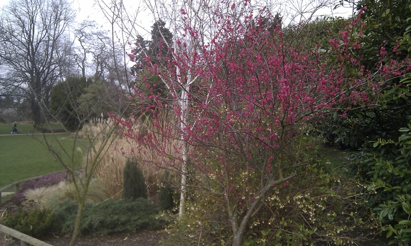 dulwich-anewgarden-spring.jpg