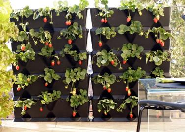 mini-garden-system-anewgarden.jpg