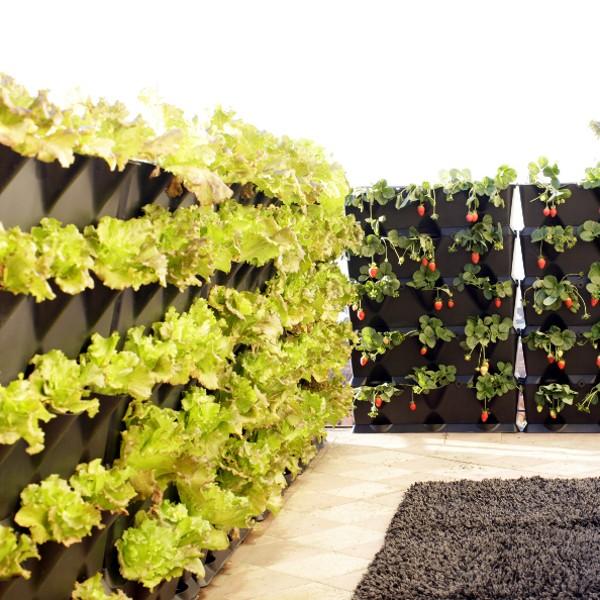 mini-garden.jpg
