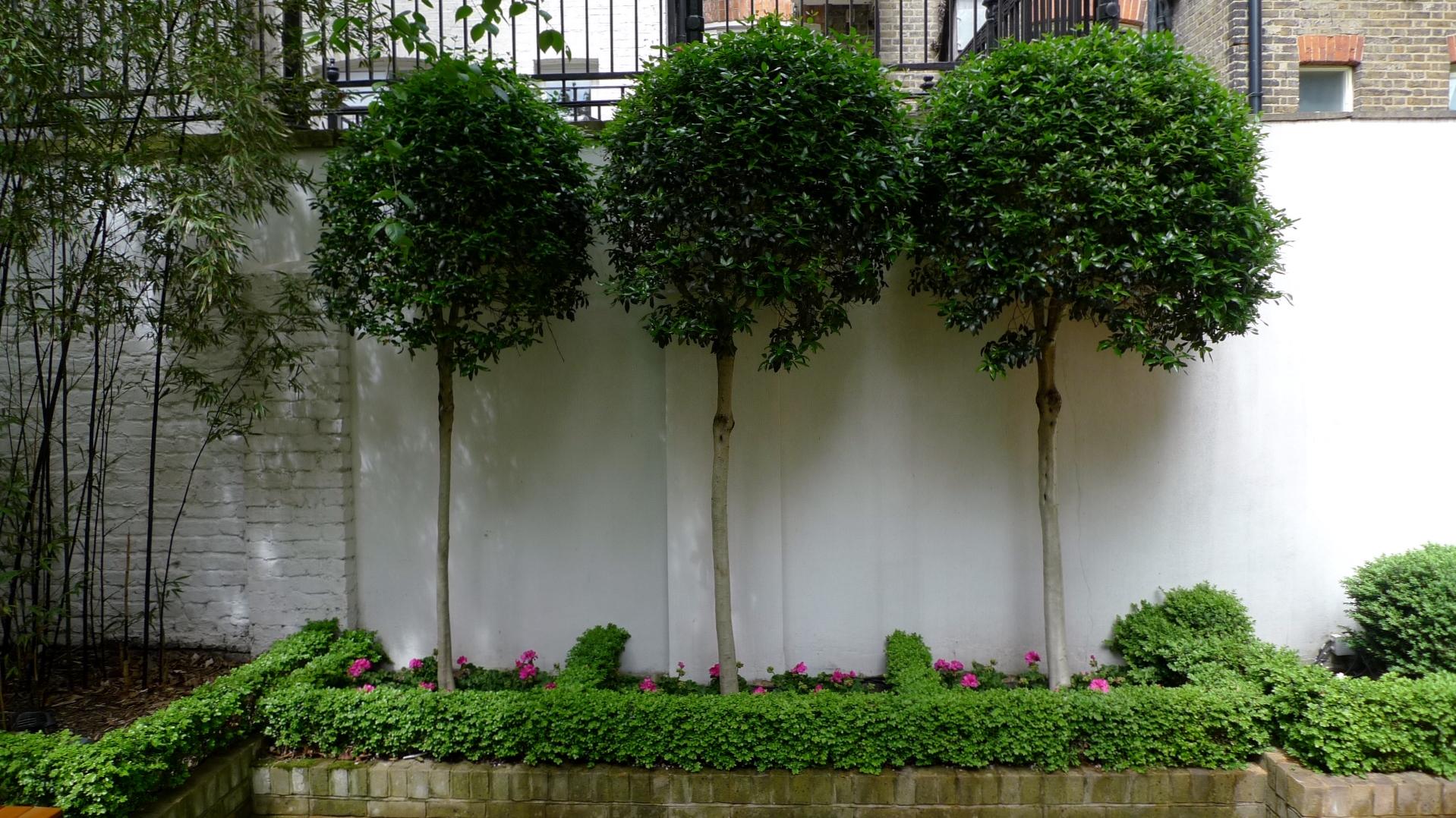clapham garden design