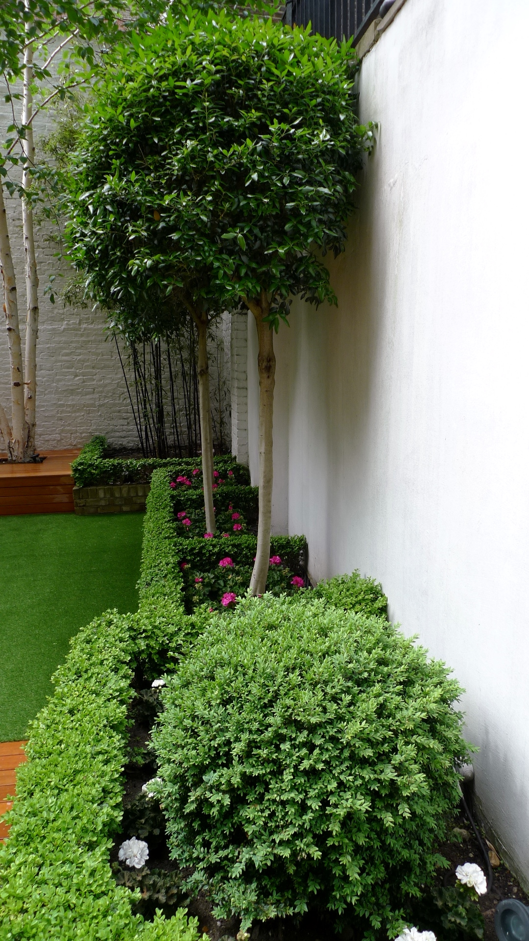 formal topiary planting scheme london