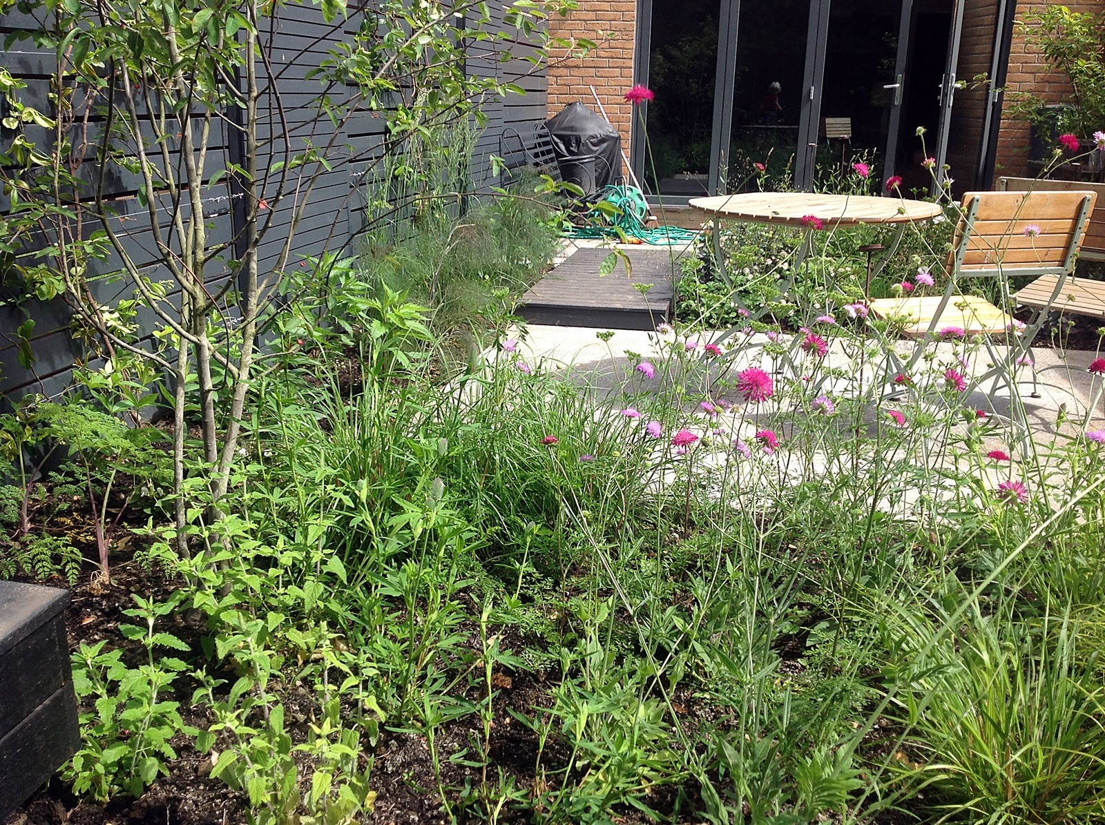 romantic urban garden design modern grey and black garden peckham brockley dulwich designer london