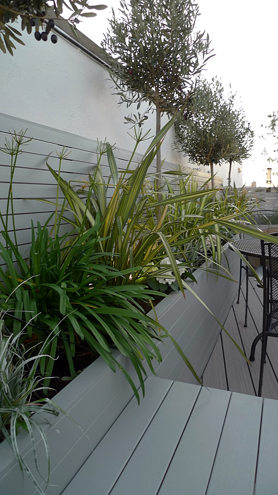 planting ideas agapanthus phormium astelia olives grey modern wood london