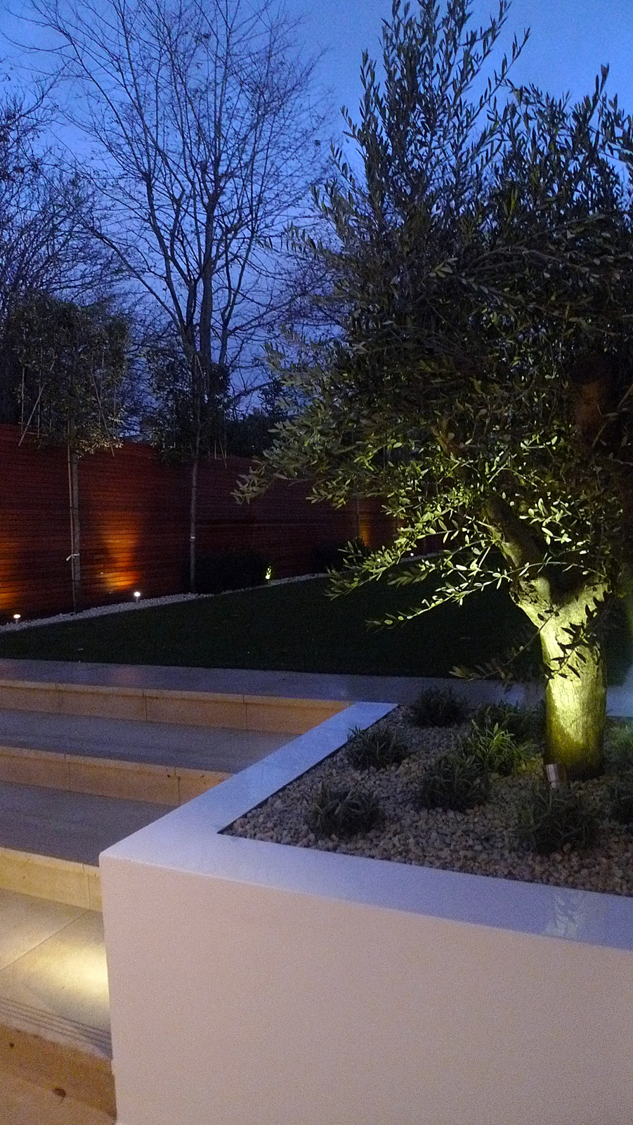 mature olive tree garden lighting raised beds cream paving steps hardwood horizontal strip fence wandsworth clapham balham battersea fulham chelsea putney london