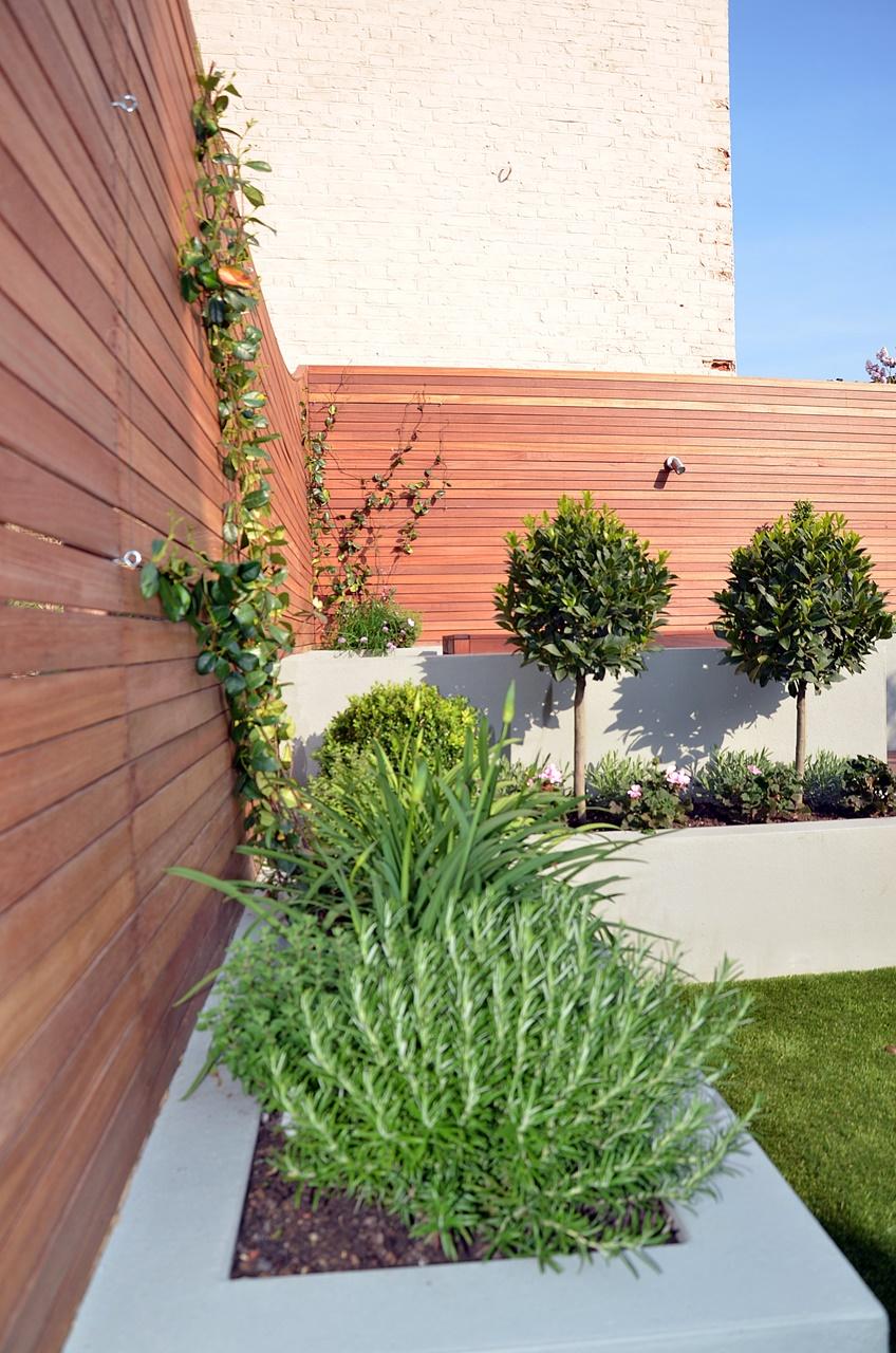 grey raised beds hardwood scren trellis fence topiary garden design london
