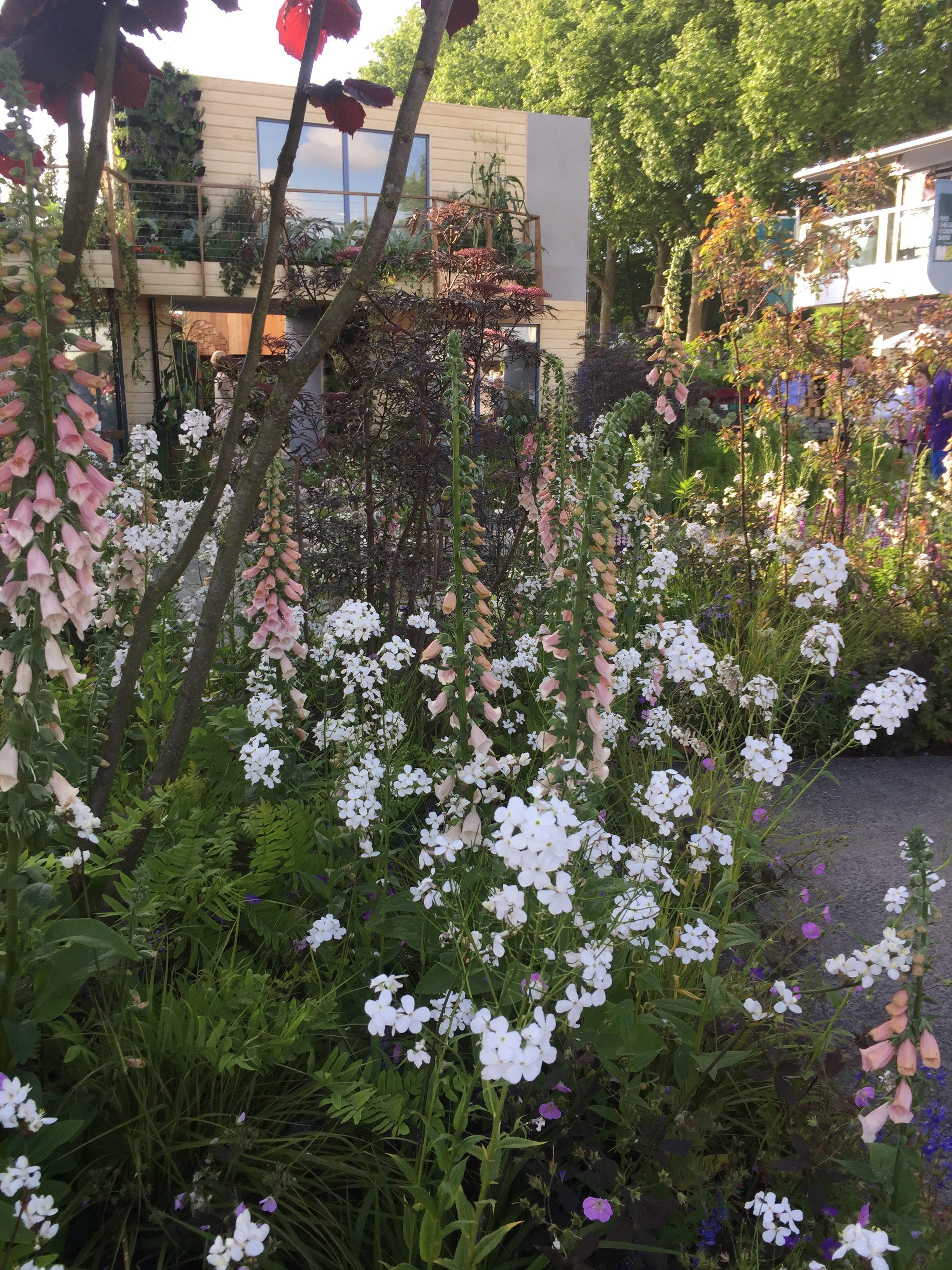 chelsea flower show london 2017